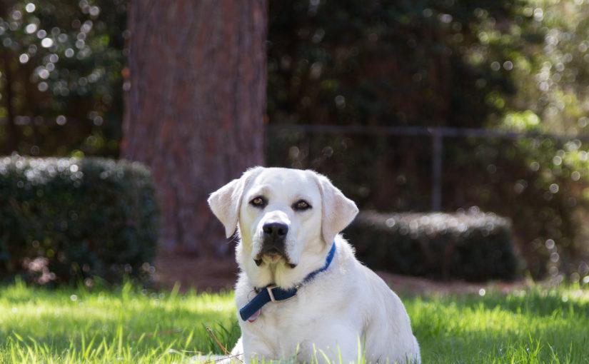 Aiken, South Carolina Family Dog Photography: Lifestyle photography includes the pet.