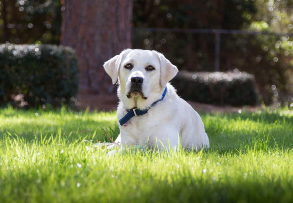 Family Dog Photography: Lifestyle photography includes the pet