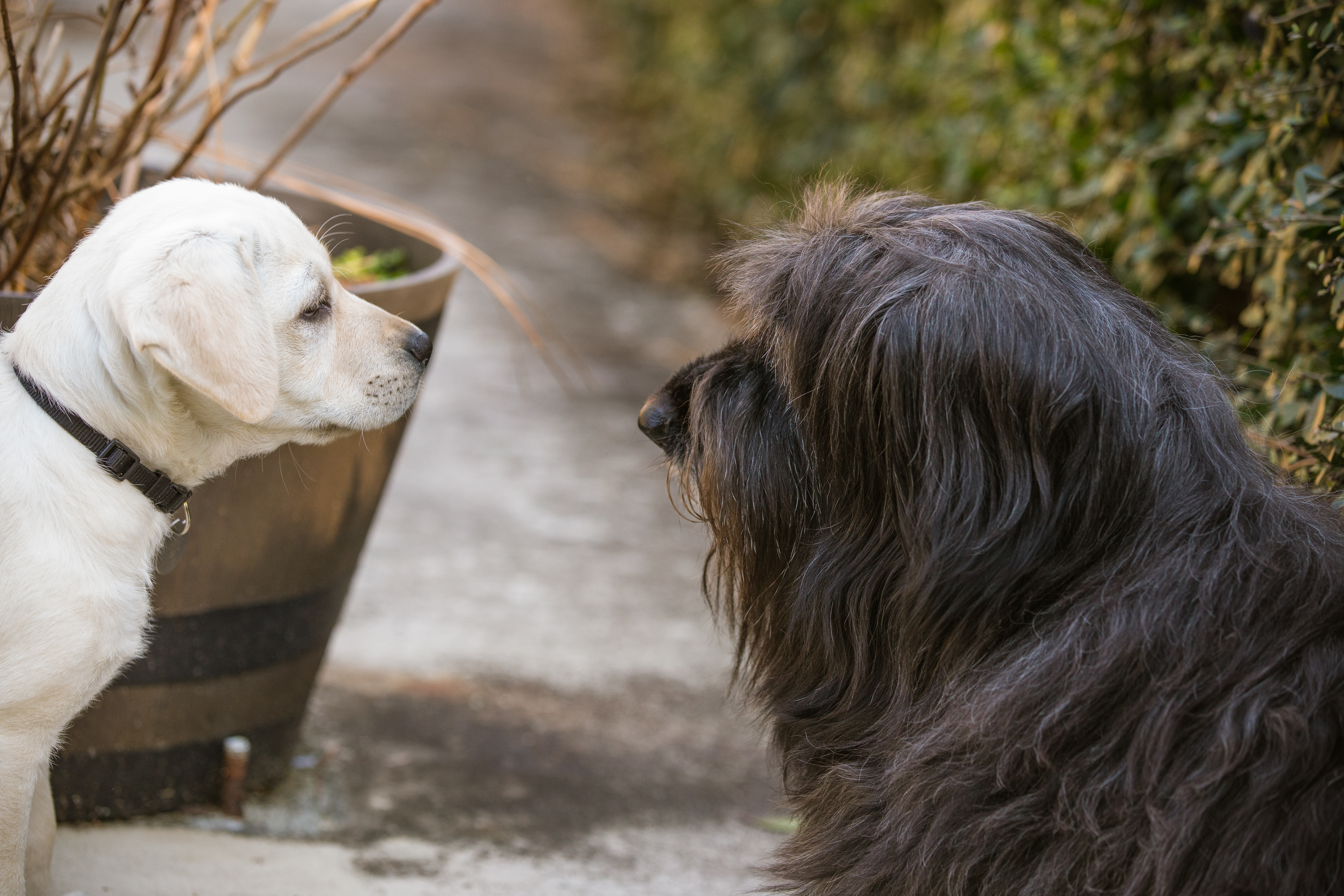Our pets are part of the family. Lifestyle photography outside.