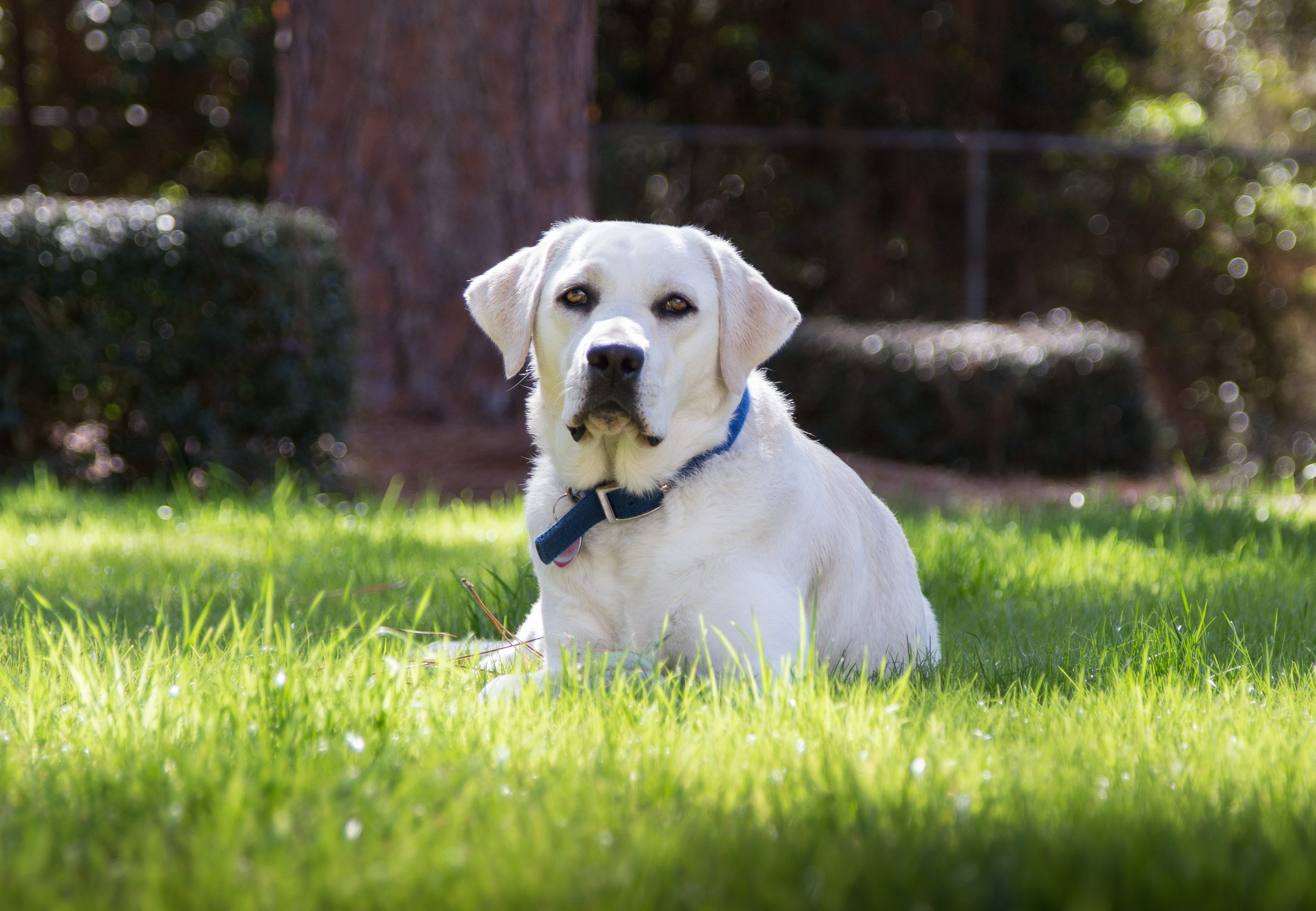 Aiken, South Carolina Family Dog Photography: Lifestyle photography includes the pet.