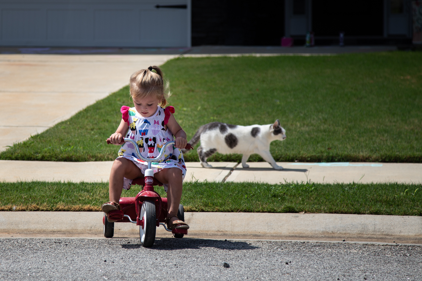 Little girl on a tricycle with her cat walking by